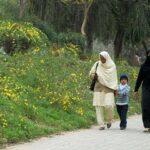 اسلام آباد: پولن کی مقدار میں قبل از وقت اضافہ